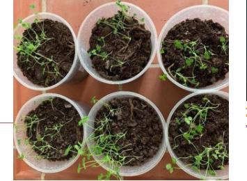 Ученые создали новые соединения для очистки почвы от ртути