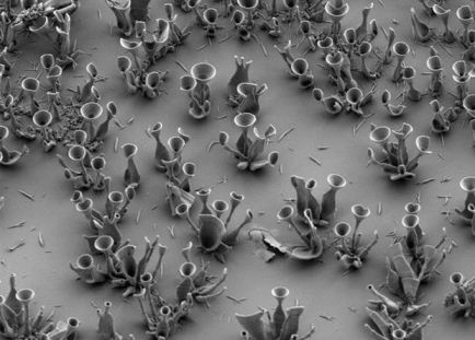 Kimyaçılar məhluldan optik elementləri çökdürməyi öyrəndilər