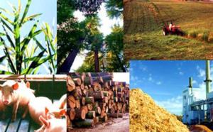 Biokütlədən 1.5 –pentandiolun alınmasının yeni üsulu