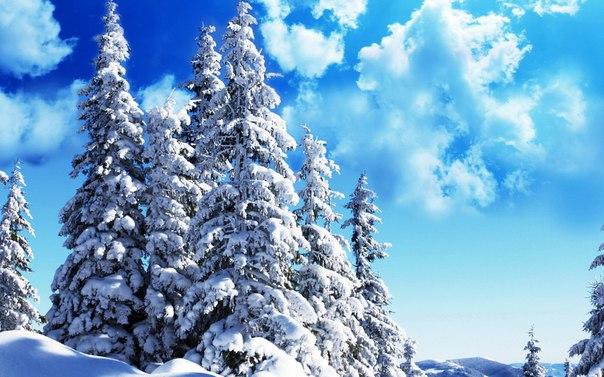 Finlər  lazer skanerini  ağacları  tanımaq üçün öyrətdilər
